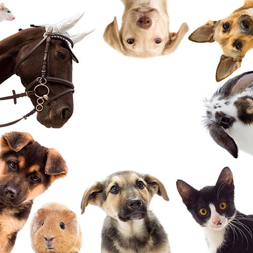 Lingettes et disques nettoyants pour animaux