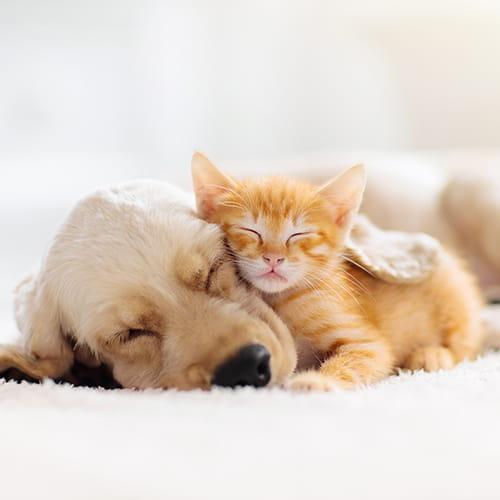 Disques soins pour chiens et chats