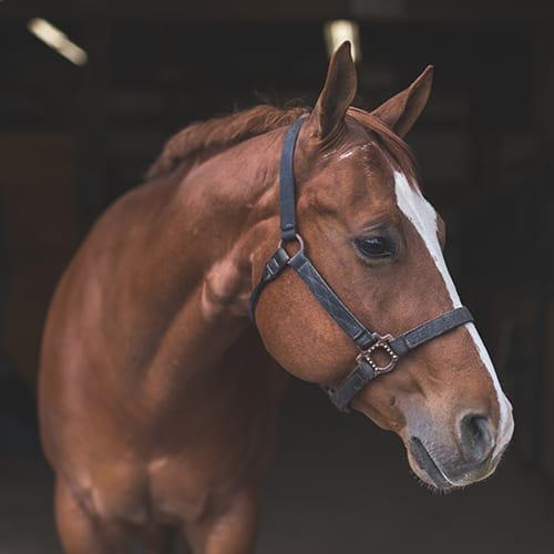Produits spécifiques pour l'hygiène et le soin des chevaux